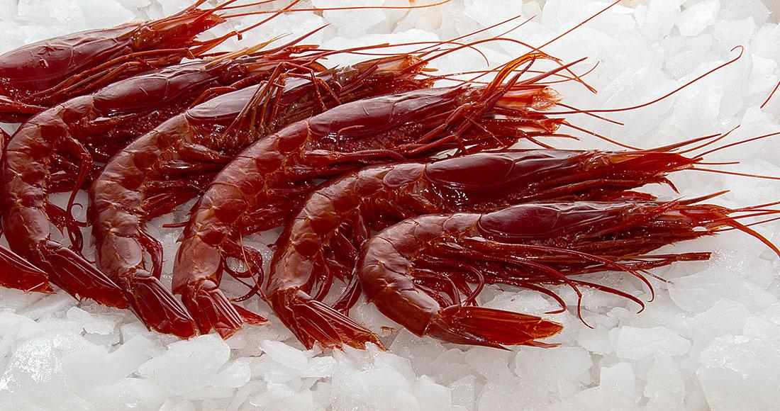 Crevettes rouges géantes