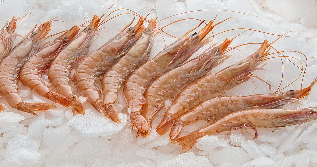 GCrevettes blanches