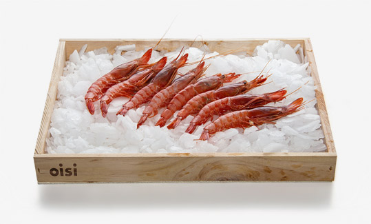 Red prawn OISI