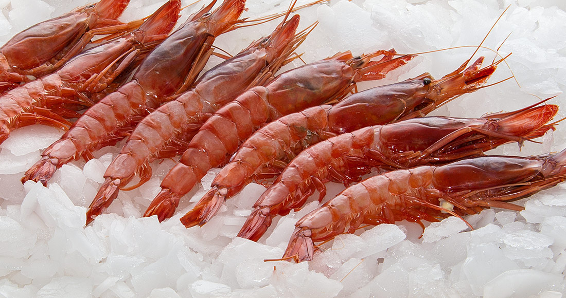 Red prawn - Oisi - The best of the sea   Cephalopods
