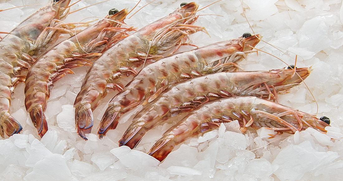 Crevettes tigrées